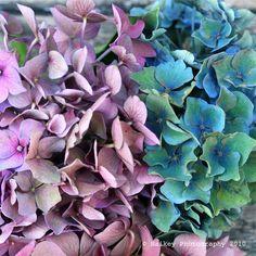 Bloemen en planten, ik ben er dol op. Tuinieren, bloemschikken of een mooi boeket.
