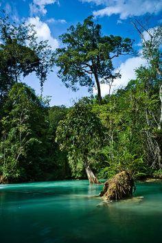 Natural pools at Kuang Si Falls, Luang Prabang. #Laos