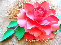 DIY Paper Roses Rose flower Templates SVG by CatchingColorFlies