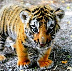 een super lieff tijgertjuh xx