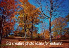 Six Creative Photo Ideas To Capture The Beauty of Autumn (The Kicksend Blog)