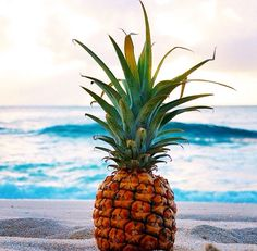 #summer #beach #ocean Pineapple