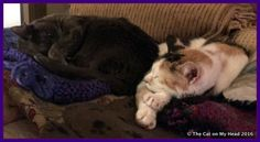 """I added """"The Cat on My Head Odd Couple Fiona & Lily Olivia"""" to an #inlinkz linkup!http://thecatonmyhead.com/?p=19655/"""