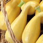Squash Chips  Cooking Spray (Olive Oil kind is best)      5 medium Yellow Crookneck Squash (or other summer squash), sliced crosswise into 1/8-inch-thick slices      1 teaspoon kosher salt      1 teaspoon fresh oregano