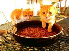 My kitties! 2013 - Celena Toby