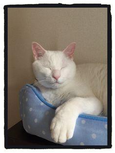 ベッドが夏バージョンになってご機嫌  #cat