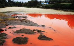 And you would think it's blood but no! Several beaches of Sydney were closed after the bloom of rare algae gave coastal waters a frightening blood-red tincture