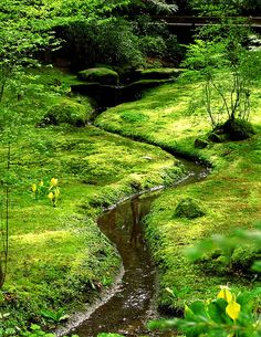 small stream through the moss garden at the Bloedel Reserve on Bainbridge Island, WA.  This area designed by Fujitaro Kubota.