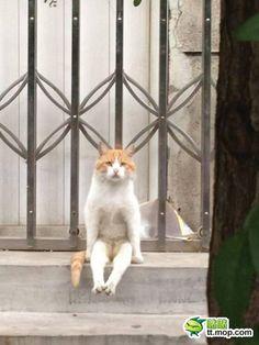 carudamon119: 【お前本当にネコか?】主人の帰りを待つネコの座り方が予想外すぎると話題に!! : オレ的ゲーム速報@刃