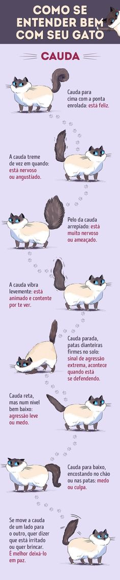 Funny cats pics kittens gatos 39 ideas for 2019 I Love Cats, Crazy Cats, Cute Cats, Funny Cats, Mom Funny, Adorable Kittens, Funny Life, Cat Care Tips, Pet Care