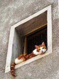 Sconse amuse à la bibliothèque ! Le chat roux à la fenêtre ...