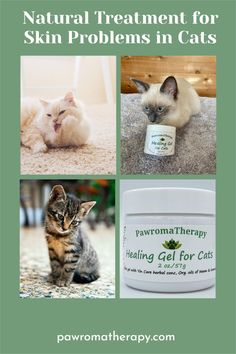Healing Gel for Cats. All natural, organic skin care gel for cats. Created by holistic veterinarian, Dr. Deneen Fasano. Healing herbal skin gel for cats made with safe, all natural ingredients. #catskinproblems#itchycat#overgrooming#catwoundgel#catwoundsalve#catskinsalve#catskingel Cat Skin Problems, Cat Allergies, Skin Gel, Flaky Skin, Natural Treatments, Natural Healing, Organic Skin Care, Herbalism, Cats