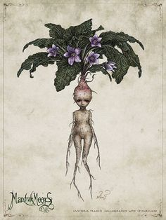 Mandrake is a mythical plant (or not so mythical because you can really obtain it in some shops) whose cries can make you die (according to Harry Potter) or heal some internal wounds etc. Mythical Creatures Art, Mythological Creatures, Magical Creatures, Arte Sketchbook, Fairy Art, Fantastic Beasts, Botanical Art, Harry Potter, Art Inspo