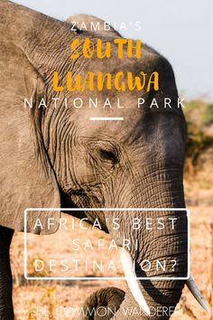 For scenery, variety and density of animals, there really is no other park like South Luangwa National Park, one of Africa's best safari destinations.