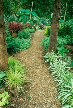 Garden path with pea gravel through shade garden for easy access and care