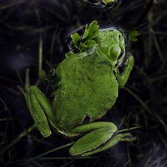 En Verde