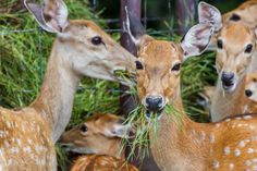 Deer Resistant Ideas - Inspiring Garden Ideas for all gardeners Types Of Bugs, Types Of Insects, Bug Control, Pest Control, Organic Gardening, Gardening Tips, Lily Turf, Deer Resistant Garden, Household Pests