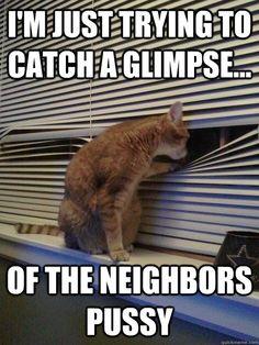 Peeping tomcat... heh