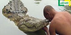 71 साल का ये मगरमच्छ सालों से कर रहा है विष्णु मंदिर की रक्षा http://www.haribhoomi.com/news/ajab-gajab/babiya-crocodile-in-ananthpur-temple/41347.html