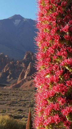 Tenerife, Canario, Orange Flowers, Billie Eilish, World Traveler, Paradise, Island, Mountains, Nature