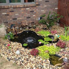 """Our """"New"""" fish pond."""