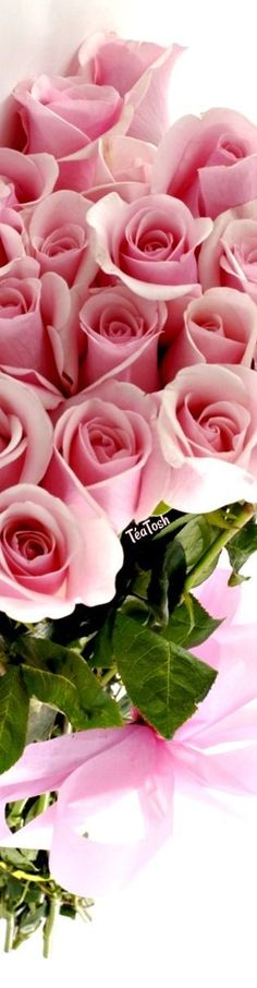 Most current Images Hybrid Tea Roses arrangement Strategies A mix of both tea may be the most well-known band of carnations classified as modern day lawn roses. Love Rose, Pink Love, Pretty In Pink, Beautiful Roses, Beautiful Flowers, Rose Arrangements, Rose Pictures, Rosy Pink, Hybrid Tea Roses