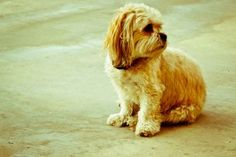 Adopting A Dog  Puppy Or Adult