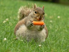 This squirrel, who is starting work on her bikini body, one snack at a time. | 15 Woodland Animals Who Are Delighted Summer HasArrived