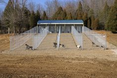 Versatile uses: chicken pen,goat pen, miniture horse corral,bird aviary(with wel… - dog kennel boarding Portable Dog Kennels, Cheap Dog Kennels, Wooden Dog Kennels, Dog Kennel Designs, Kennel Ideas, Outdoor Dog Runs, Outdoor Dog Kennel, Dog Kennel Flooring, Dog Boarding Kennels
