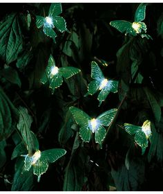 Buy Solar Colour Changing Butterfly Lights   Set Of 20 At Argos.co.uk