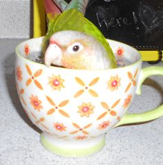 conure in a cup:)