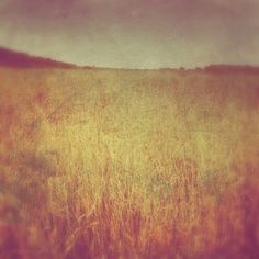 Sussex fields #abstract #photography www.angelacollier.com