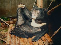 Is the end of 'house of horror' bear bile factories in sight ...