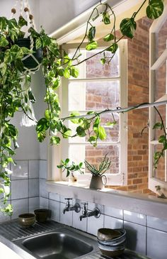 Ivy in the kitchen.A simple way to make your kitchen greener