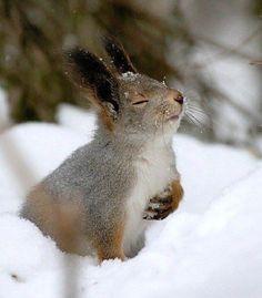 Haas in de sneeuw.