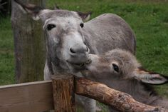 Mother and child :) Our Sweet donkeys Sara and Blueberry :)