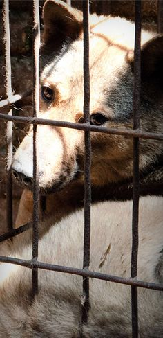 Please sign this!http://www.voicelessfriends.org/  -People's pet dogs are being stolen for the dog-meat-trade.