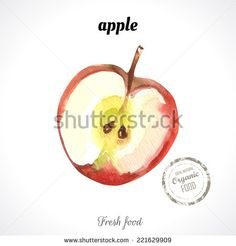 Watercolor apple. Provencal style. Recent watercolor paintings of organic food. Fresh fruit. - stock vector