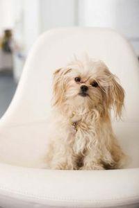dog training,teach your dog,dog learning,dog tips,dog hacks Peek A Poo, Dog Enrichment, Baby Animals, Cute Animals, Dog Daycare, Daycare Ideas, X Picture, Dog Hacks, Training Your Dog