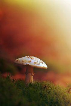 **Goodbye Autumn