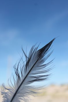 I find this so pretty. (Seagull feather)