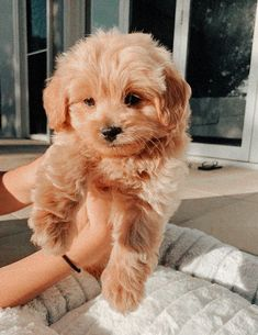 Super Cute Puppies, Baby Animals Super Cute, Cute Baby Dogs, Cute Little Puppies, Cute Dogs And Puppies, Cute Funny Animals, Doggies, Cute Puppy Pics, Tiny Puppies