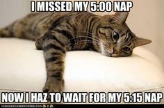 I think I'm part cat cuz this is how I feel right most of the time