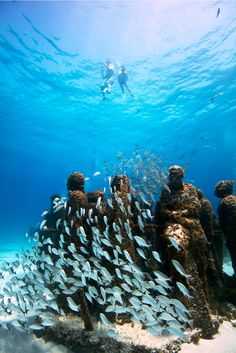MUSA Underwater Museum, Cancun, Mexico- Snorkeling here is so awesome! Underwater Museum Mexico, Underwater World, Dream Vacations, Vacation Spots, Places To Travel, Places To See, Underwater Sculpture, Quintana Roo, Cancun Mexico
