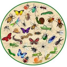 Game, scroll down for an explanation - Game, scroll down for an explanation - Butterfly Park, Dog Grooming Business, Black Lab Puppies, Bugs And Insects, Chenille, Animal Projects, Too Cool For School, Equine Photography, Exotic Pets