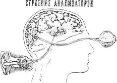 Brain Based Learning:  3 Tips for Increasing Student Retention