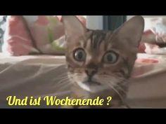 Das Warten hat ein Ende Endlich Wochenende Ich wünsche dir ein paar stressfreie Tage - YouTube Humor, Youtube, Cool Stuff, Cats, Animals, German, Animal Kingdom, Chakra, Videos