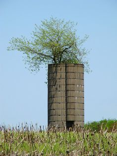 Abandoned rural silos catch seeds and then protect fragile saplings from the prairie winds as they grow tall inside. In time, without tending by human hands, the trees have grown so high that lush canopies of branches now rise from the structures and top them like leafy umbrellas. http://www.nytimes.com/2012/04/30/us/amid-rural-decay-trees-take-root-in-silos.html?ref=us