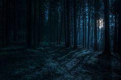 dark forest - Google Search