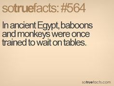 In ancient Egypt, baboons and monkeys were once trained to wait on tables.